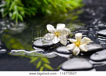 Set of two gardenia with candle on black pebbles