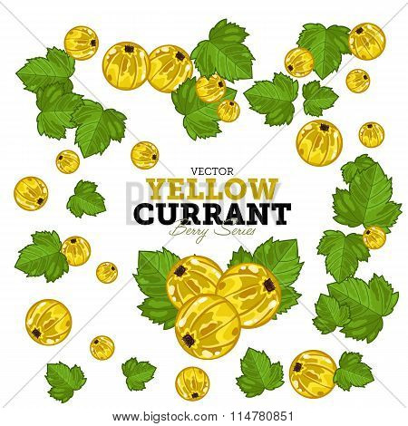 Black Currant Set, Vector.