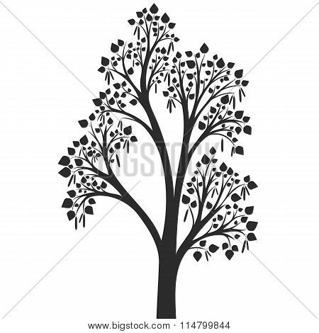silhouette of birch tree with leaves