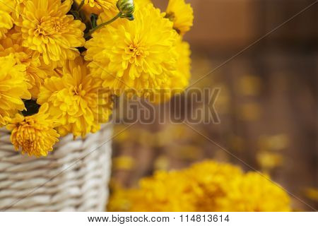 Closeup Beautiful Bouquet Of Yellow Chrysanthemums Flowers In Wi