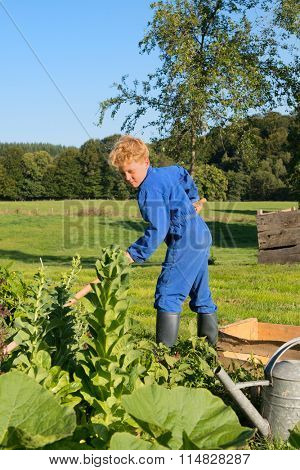 Farm boy works in the vegetable garden
