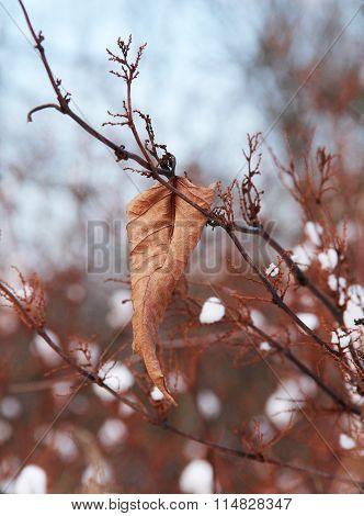 sear leaf in winter