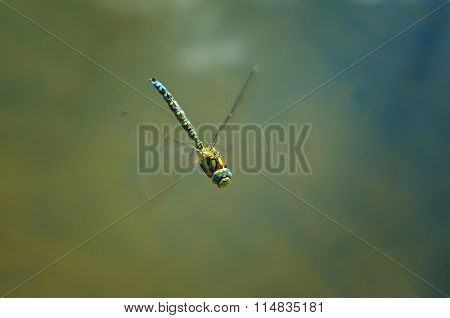 Dragonfly in Green Background