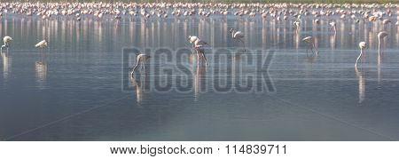 Pink And Grey Flamingos At The Salt Lake