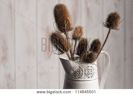 Thistle Plants In Pitcher Vase Over Wooden Panel Backdrop