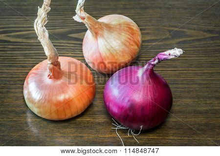 Still Life: Three Large Onions On The Table.