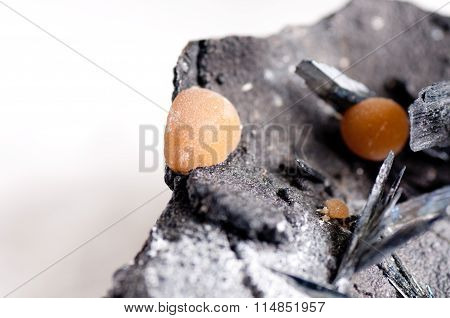Vivianite Mineral Sample