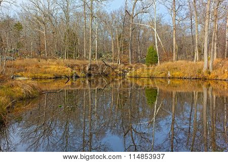 Forest landscape with reflection of trees near the water.