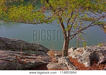 Pine tree at the edge of rocky river bank.