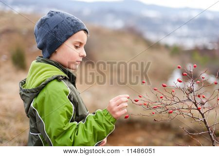 Child Picking Red Berries