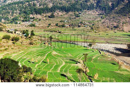 Green Terraced Paddy Field In Nepal
