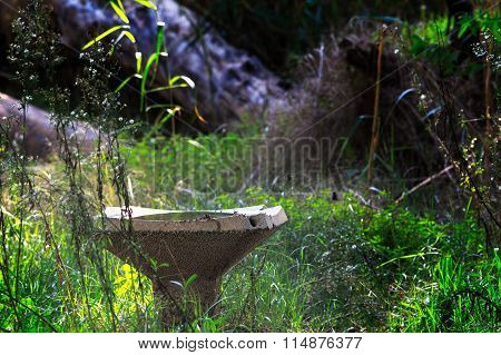 Abandoned Overgrown Fountain Of Drinking Water