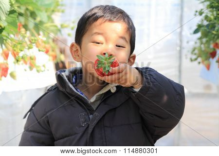 Japanese boy eating strawberry (3 years old)