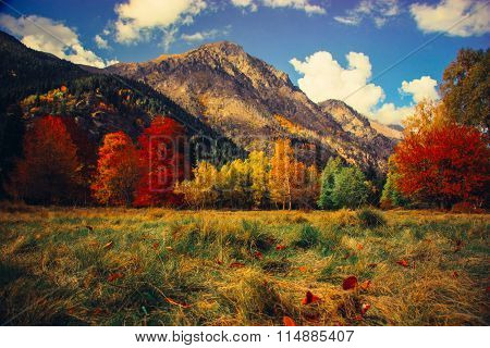 The Mountain Autumn Landscape With Colorful Forest On A Clear Day.