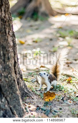 Squirrel On Autumn Forest
