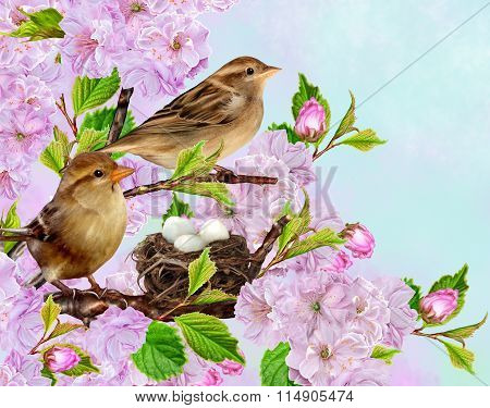 Two Sparrows On Near The Nest On The Background Of The Cherry Blossoms