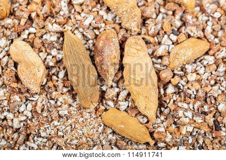 Dried Seeds And Ground Cardamon Close Up