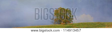 Morning Autumn Landscape With A Lone Tree And Thick Fog