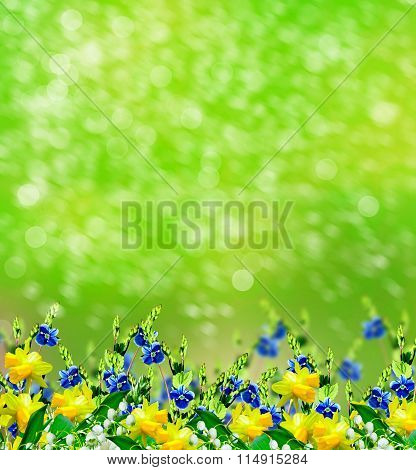 Summer Landscape. Lily Of The Valley. Narcissus
