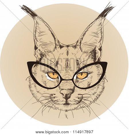 hipster portrait of bobcat with glasses