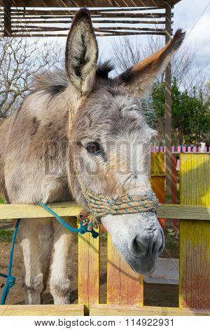 Beautiful close up of a donkey at a park.
