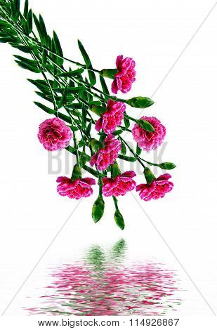 Bouquet Of Flowers Carnation.