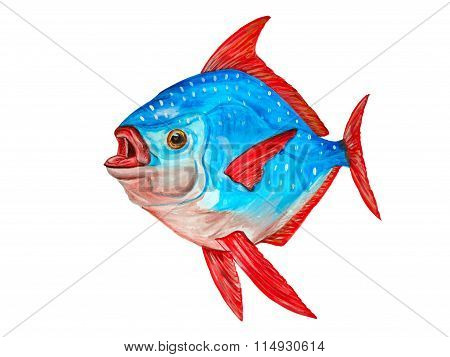 Watercolor Tropical Lampris Regius Fish On White Background. Hand Drawn Artwork