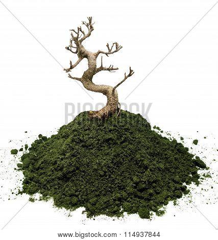 Dry Bonsai Tree