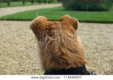 Dog looking at lawn