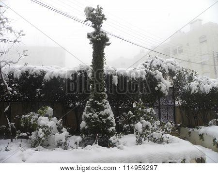 Snowy Slim Tree
