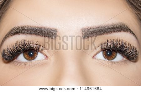 Brown Eye Makeup. Beautiful Eyes Make up detail, perfect beauty eyebrows