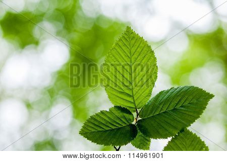 leaf on a tree in the forest.  nature green wood sunlight backgrounds. spring, summer