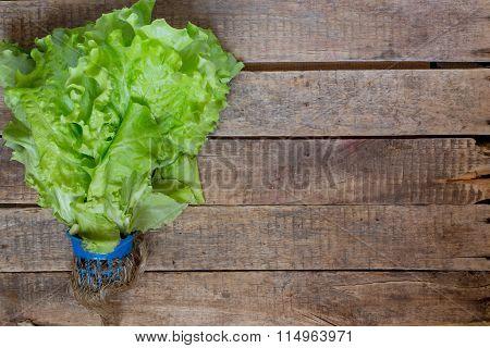 Lettuce, spring, vitamins, green