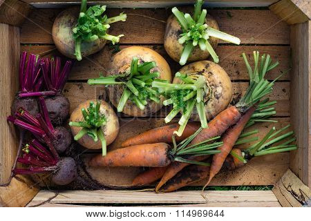 Mix of unwashed root vegetables in a box