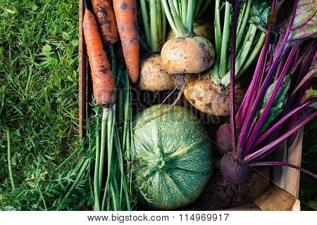 Freshly harvested vegetables