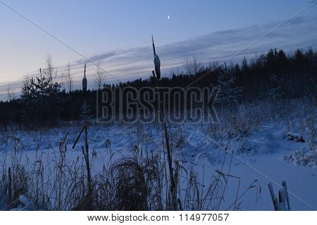 Nature In The Wild Forest Under The Moon At Night In Cold Weather