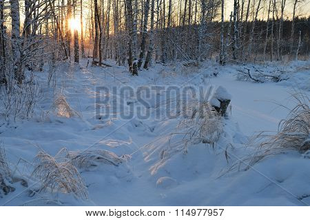 Solar Path On Snow Is A Winter Forest At Sunrise