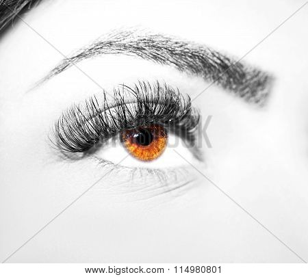 Brown Eye Makeup. Beautiful Eyes Make up detail, eyelash extension