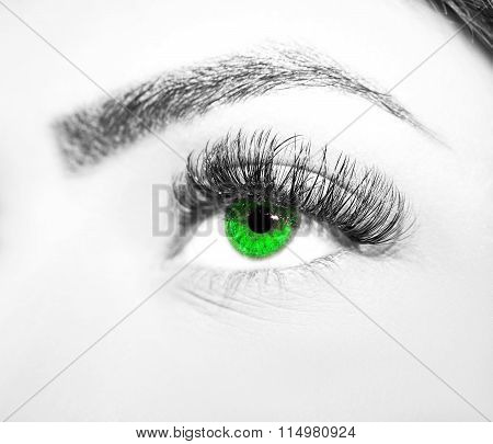 Woman green eye with extremely long eyelashes
