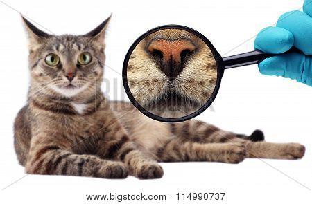 The Cat Expert. We explore cat