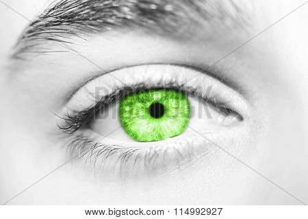an insightful look on green colored eyes