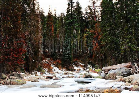 snow in the forest at Sequoia national park, USA