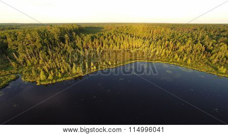Forest At The Lake