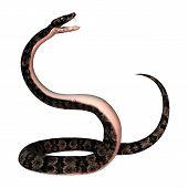 ������, ������: Cottonmouth Snake On White