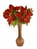 picture of christmas flower  - red christmas flowers over white background well isolated - JPG