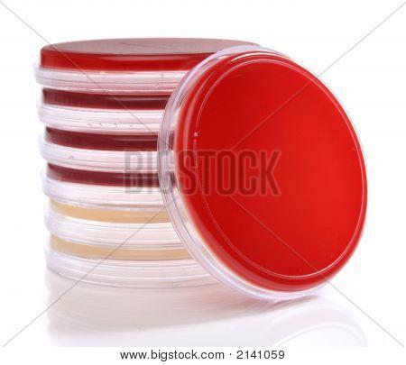 Petrischalen für medizinische Forschung