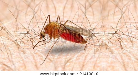 Anopheles mosquito - dangerous vehicle of infection