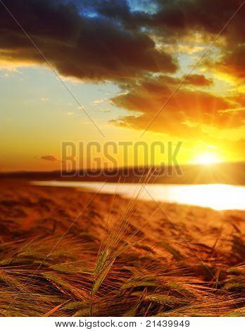 Goldener Sonnenuntergang über Weizenfeld