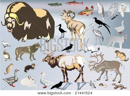 illustration with north animal collection