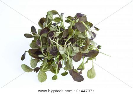 Pak Choi Sprouts
